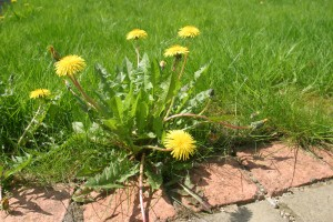 ProCARE Chiropractic and Acupuncture preventing health weeds from growing in Overland Park and Olathe