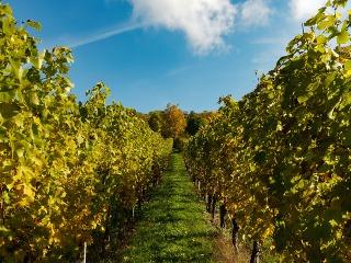 Bug Creek Winery Vineyard
