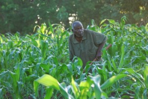 Dr. Tembo's father Mr. Sani Tembo who is 89 years old is still active and works hard hoeing to grow food. This was in December 2011