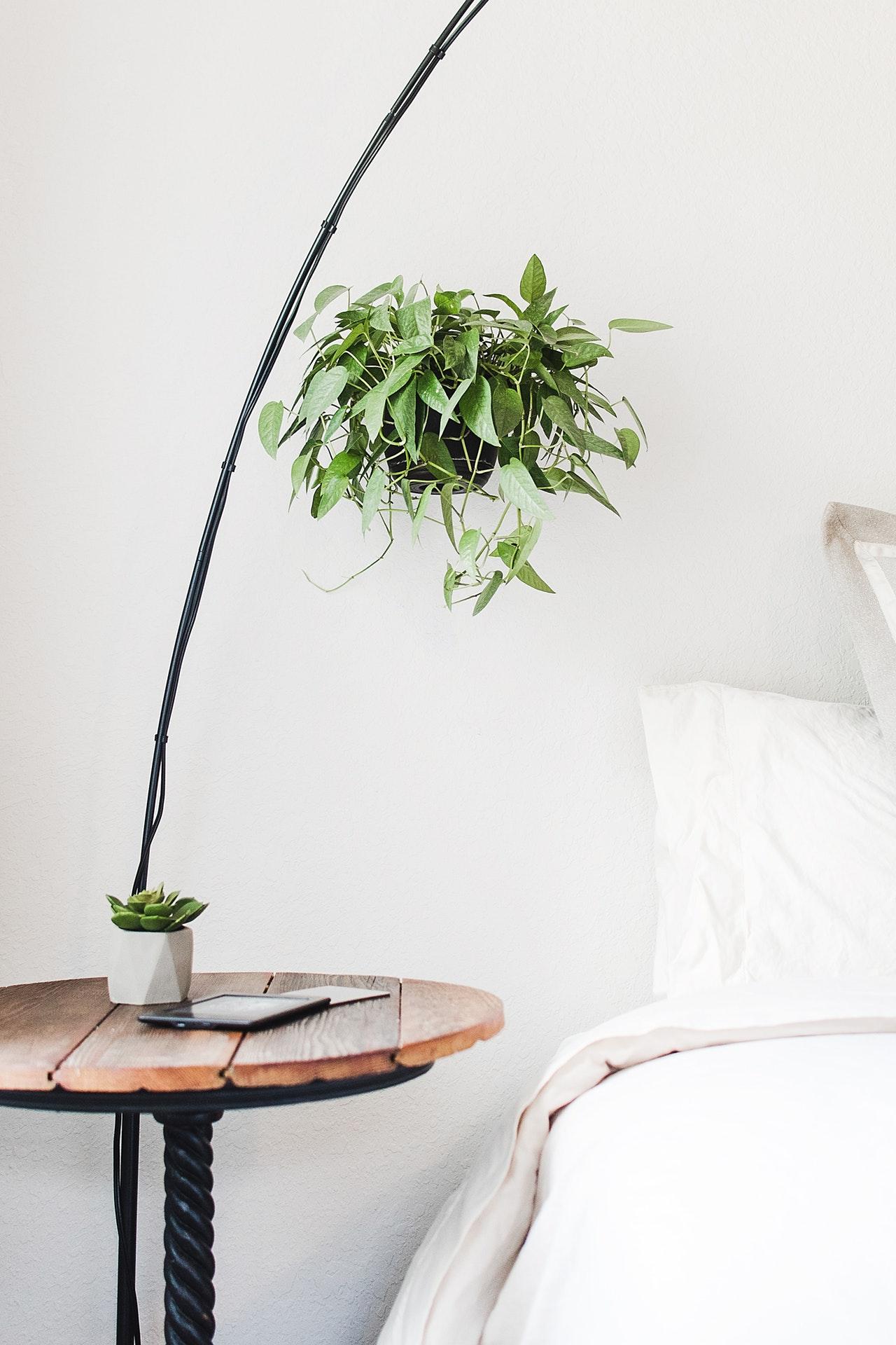 bed-decor-indoor-plants-2374967