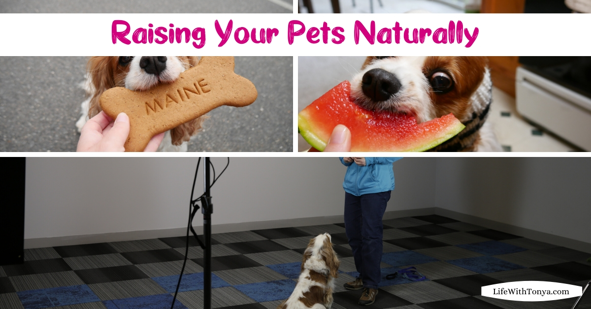 Natural pet care, training and travel