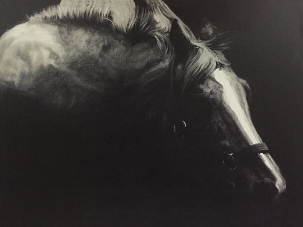 Wall - Pinto Horse on black background3