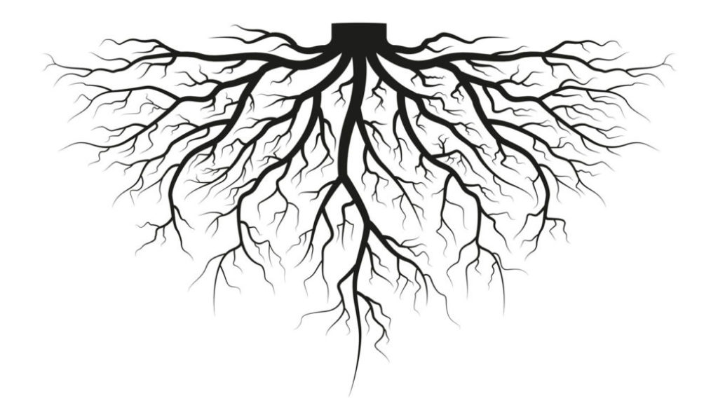Rooted Motives
