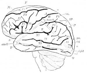 brainsmall