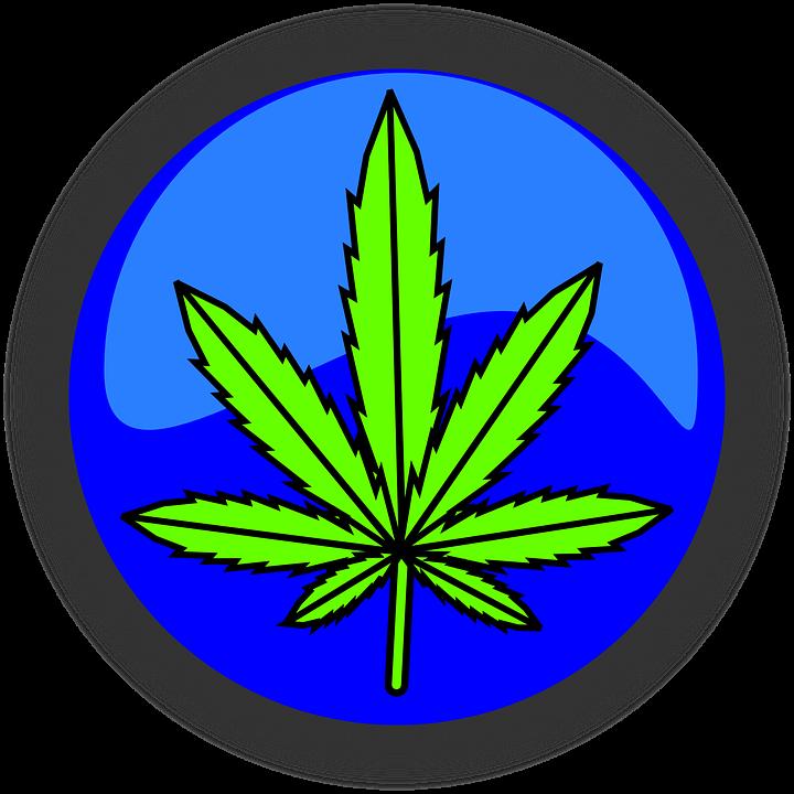 Marijuana Doctor