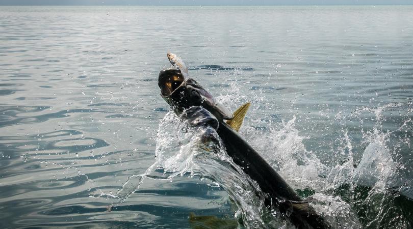Tarpon fishing today