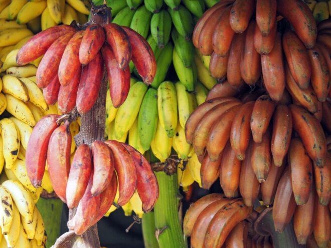 Types of banana
