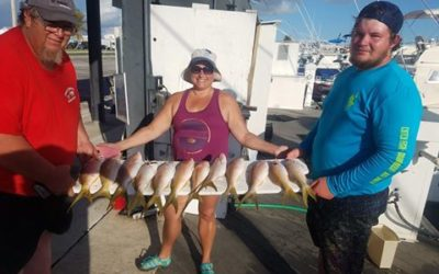Some nice Yellowtail snappers today