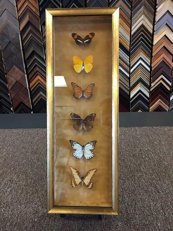 framed butterflies