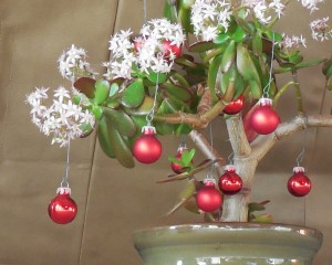 Jade Plant with Christmas Decorations