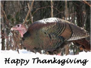 happy-thanksgiving-2016