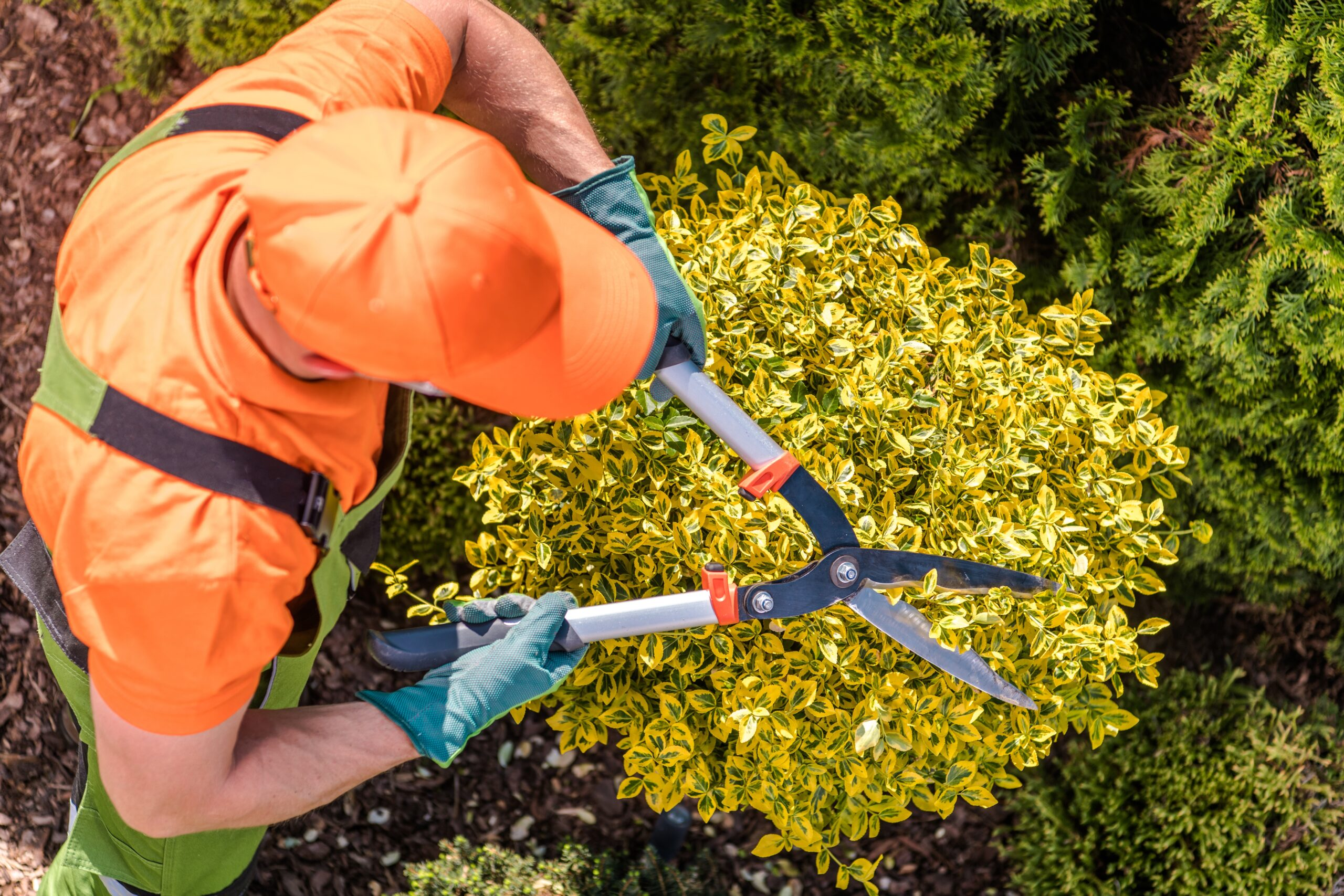Landscaping, Snow Removal and Property Maintenance