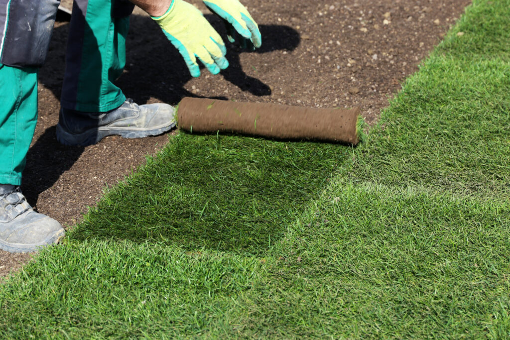 Laborer installing grass and new sod at a business