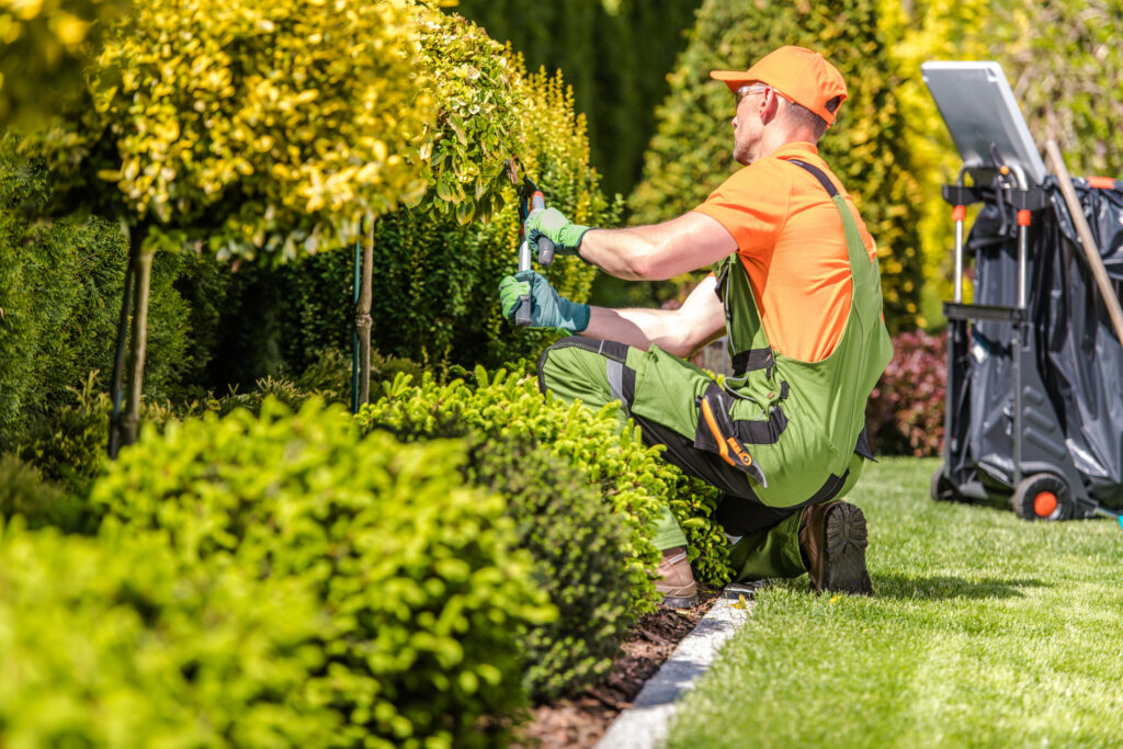 Property All landscaper trimming shrubs in the spring