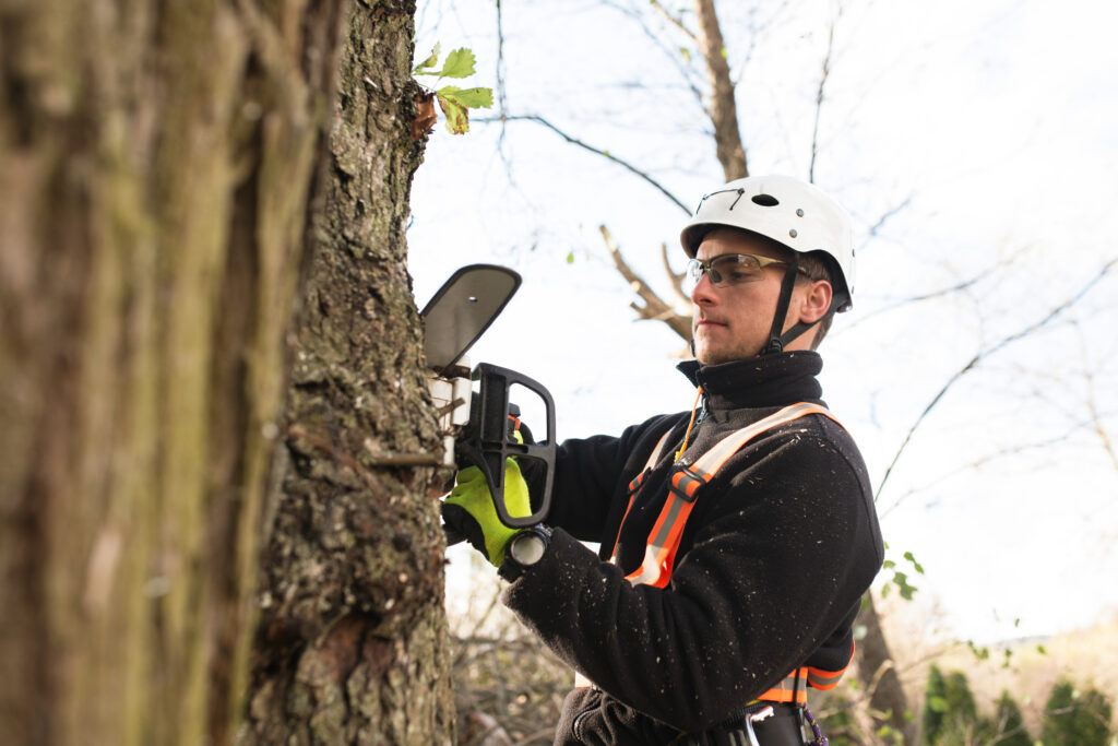 Worker removing a rotted tree from a property with industrial grade equipment