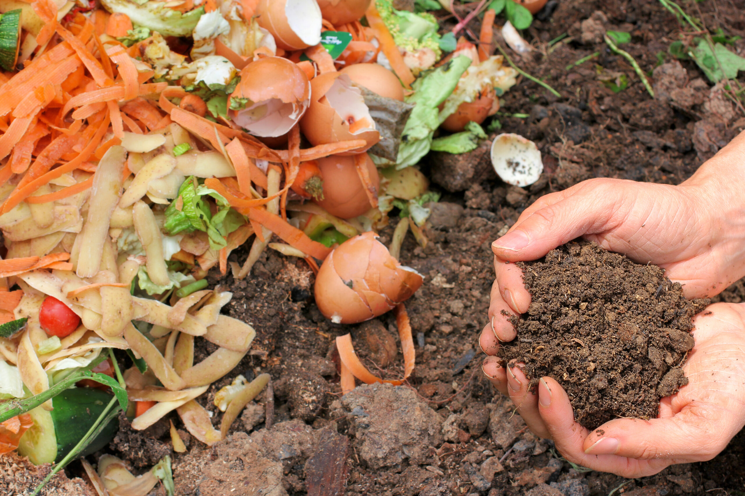 Your guide to composting