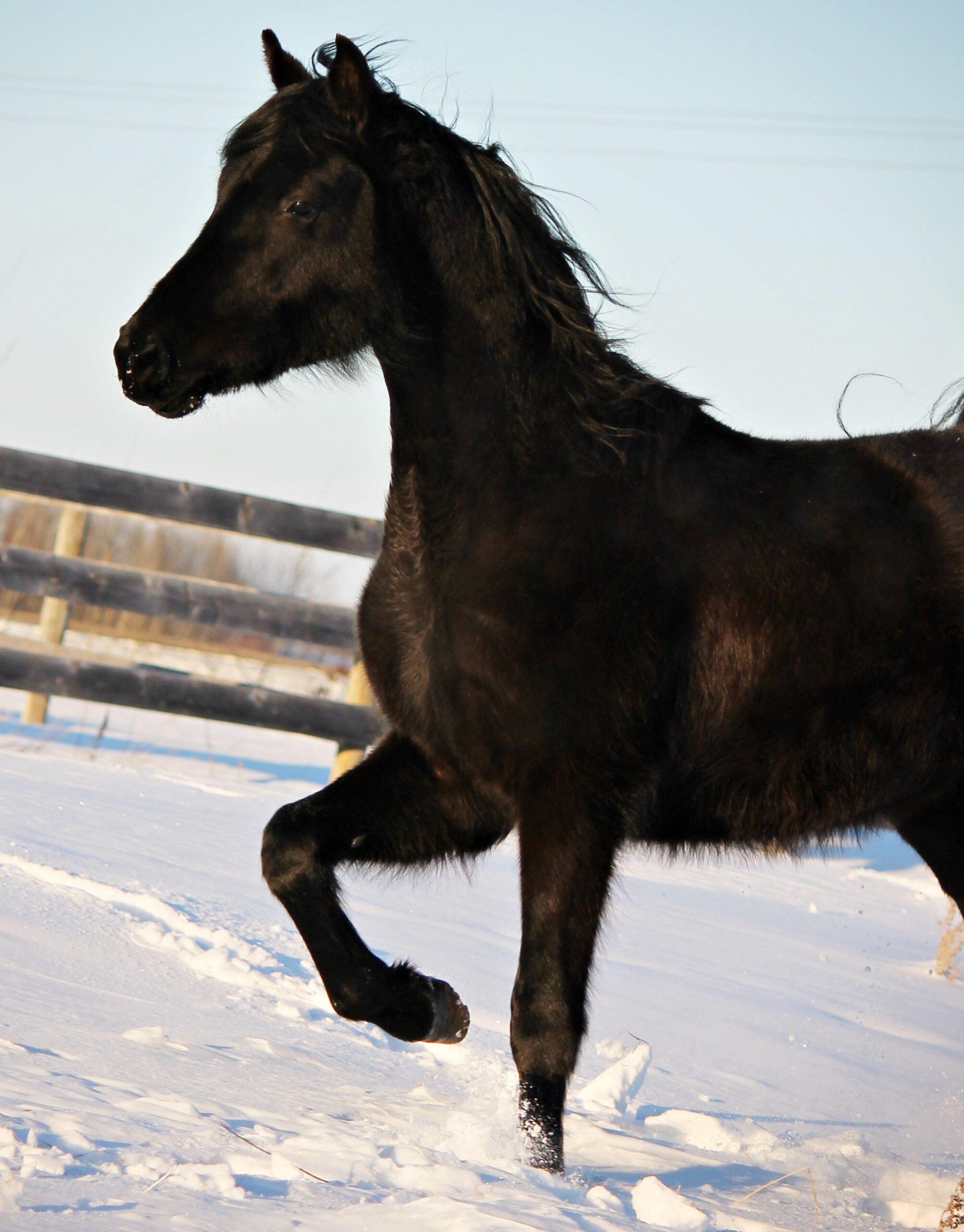 JMF Snow Dancer