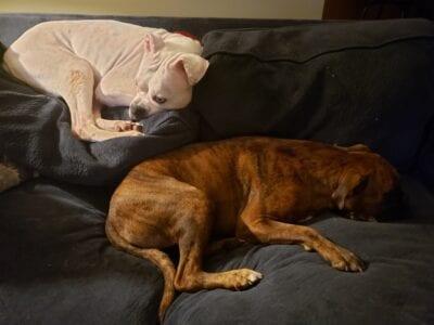 Lexie & Kratos IMG_5198