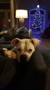Lexie & Kratos IMG_5211