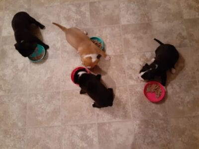 Puppies and Maggie83701749_10216544553071230_2072878640139337728_o