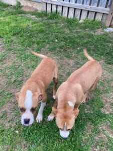 Tally (L) and Dega (R)