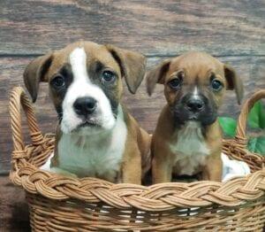 Brilee (R) Brody (L)