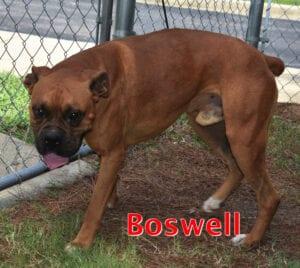 Boswell full body copy