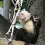 Monkeys, Photo: Keith Lovett
