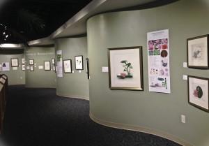 Julia Rega Exhibit