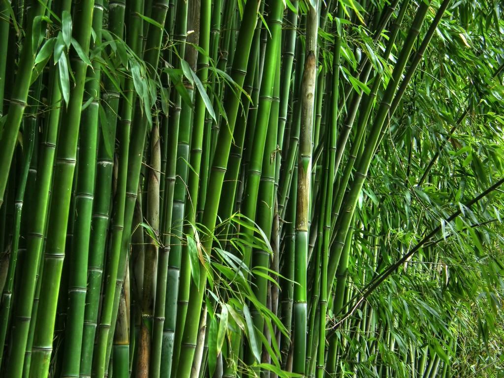 bigstock-Green-bamboo-grove-20402063