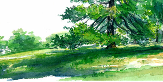 sentinel pine in centennial park | 2010  watercolour on canson | size: 40 x 13cm