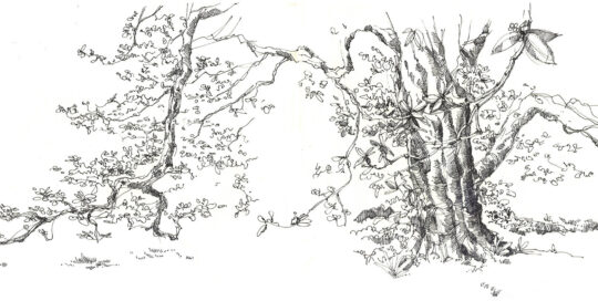 the equinox tree | 2009 | 50cm W x 24cm H | ink on canson paper