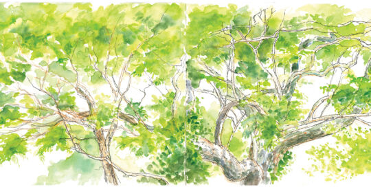 the jacaranda in the garden at MetroRehab | ink and watercolour, canson journal