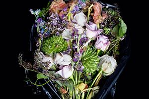 pulse-art-fair-pulse-projects-flowers