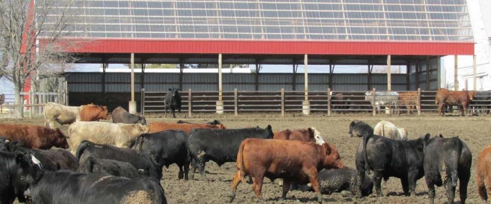 red open side cattle barn pole building