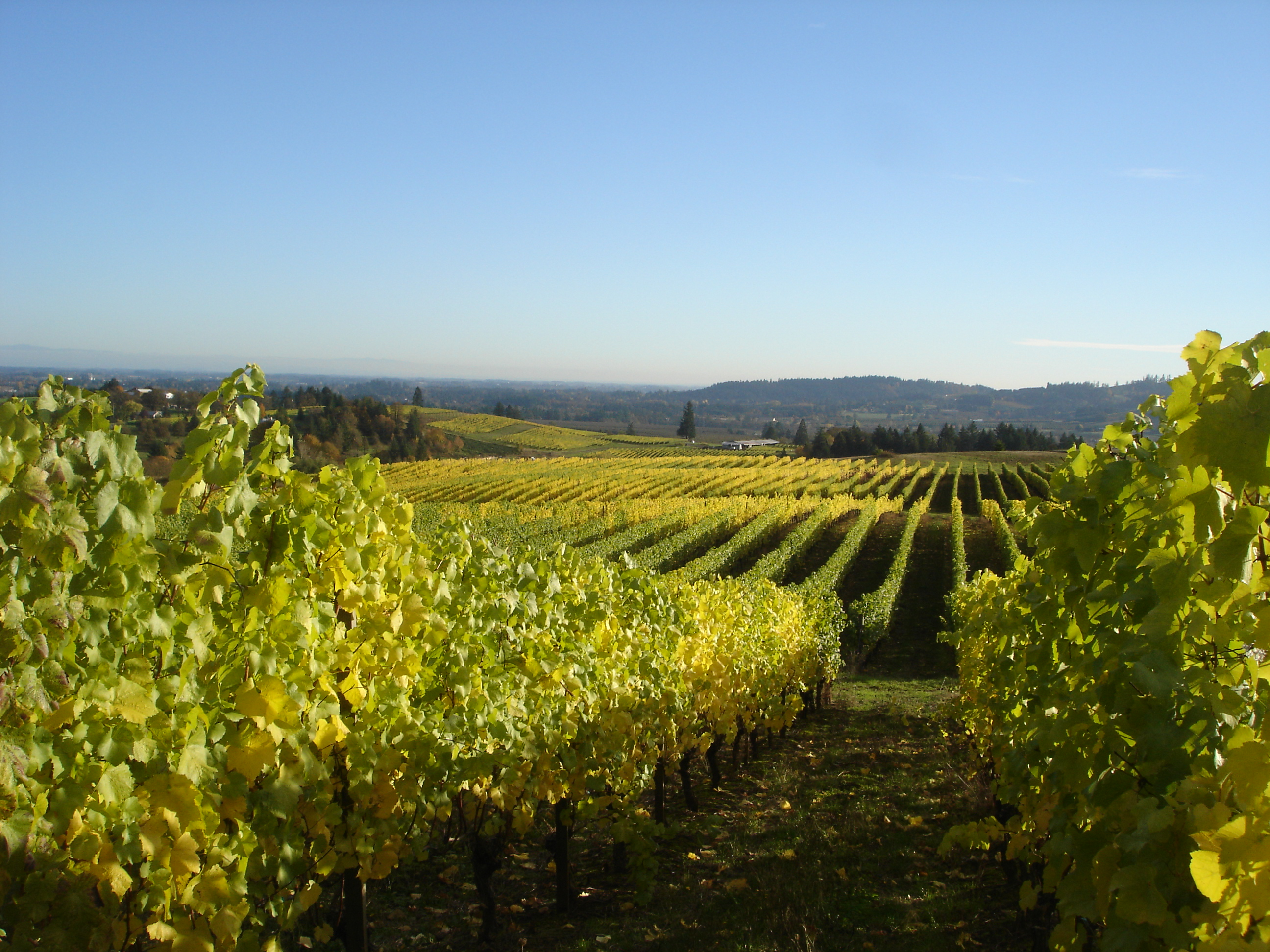 View south from Lia's Vineyard