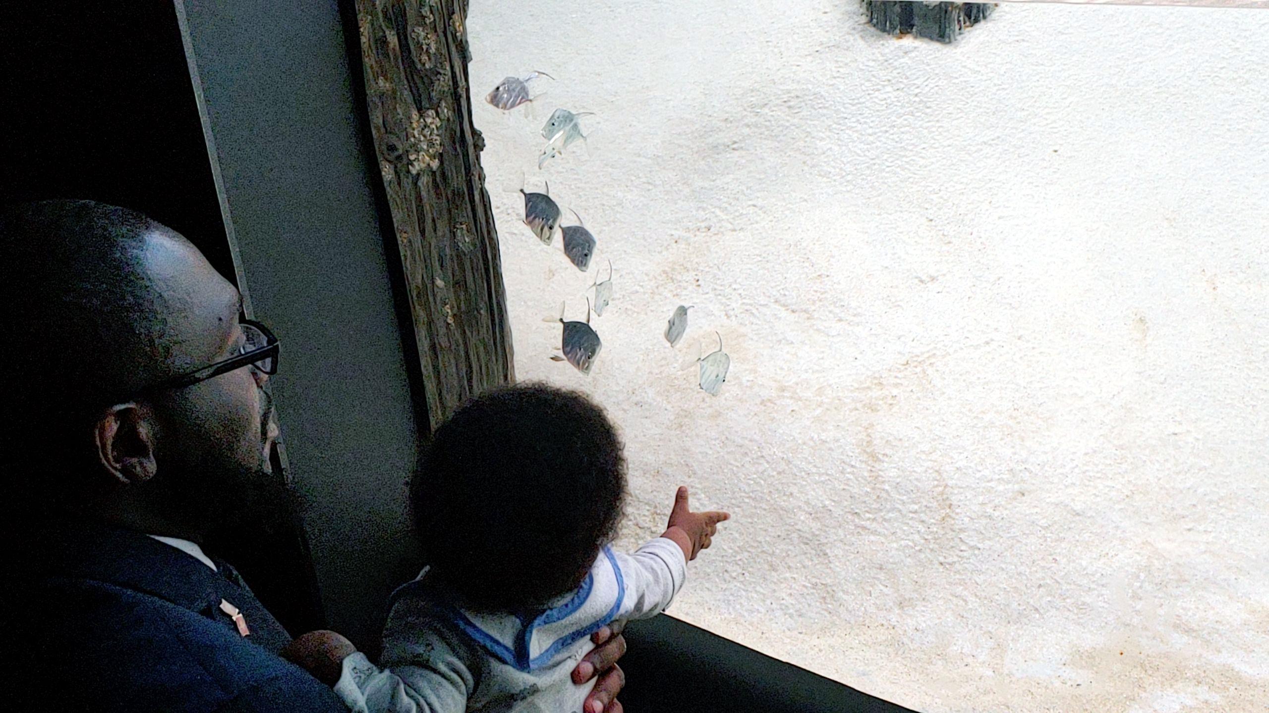 Living Our Dreams - Baltimore National Aquarium