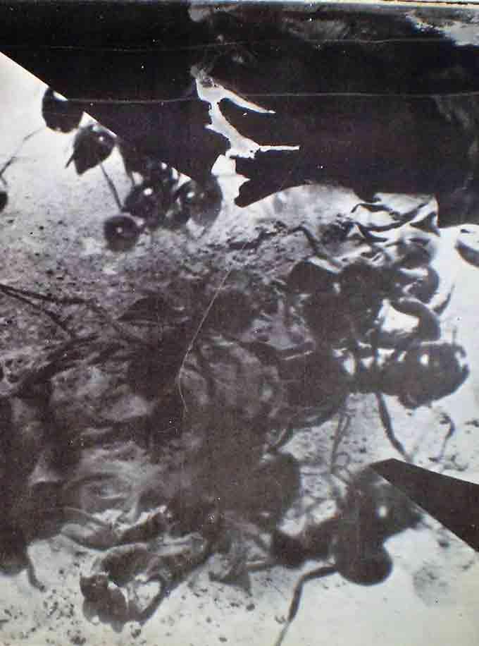 עופרת-שבירה,--צולם-1968--בקו-התעלה-02