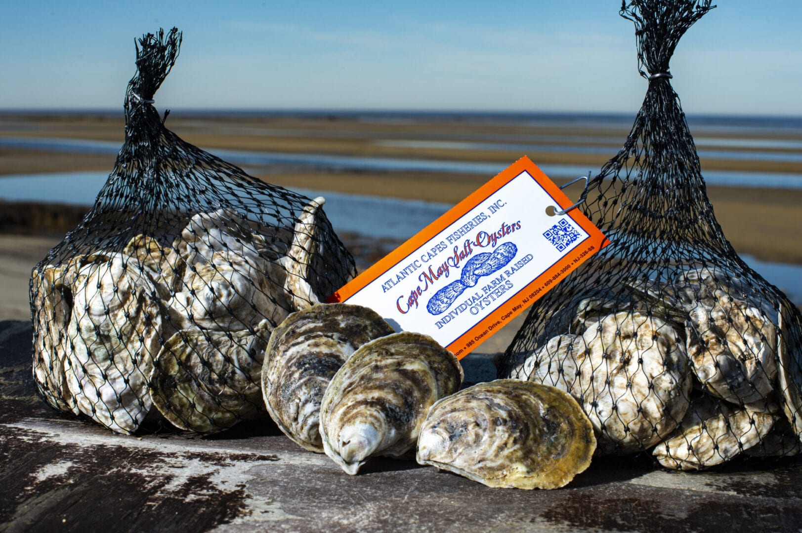 Cape May Salt Oysters Promotional