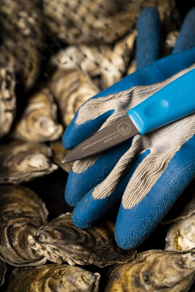 A Cape May Salt Oyster Farms blue Shucker and a pair of shucking gloves lay on top of a bag of oysters from Cape May Salt Oyster Farms.