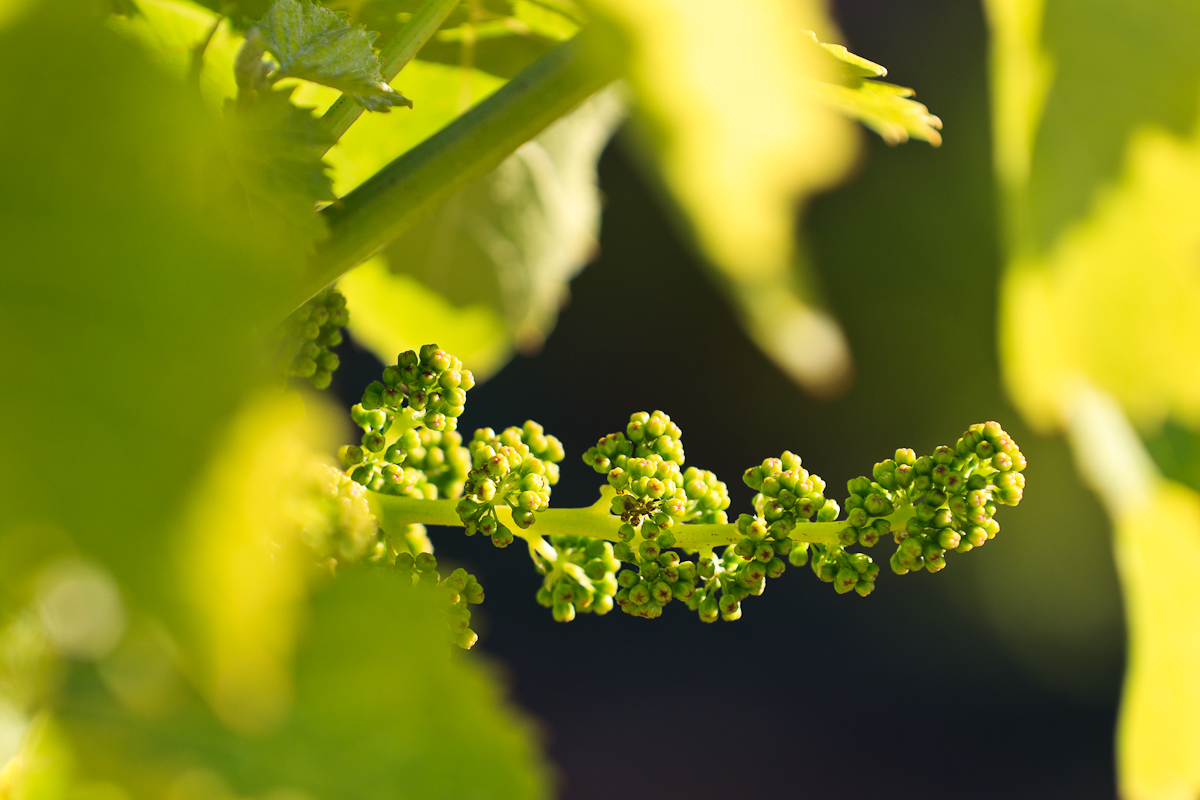 Here Are Many Variations Of Vines