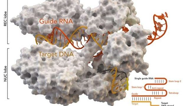 New anti-CRISPR proteins discovered in soil and human gut