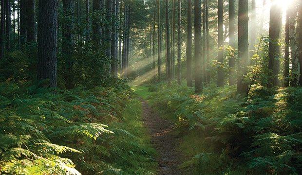 A Trillion Trees? Let's Talk…