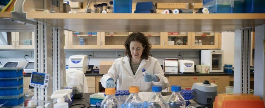 Disrupted Gut Microbiome Promotes Breast Cancer Spread In Mice