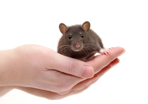 Gene therapy protects against major age-related diseases in mice