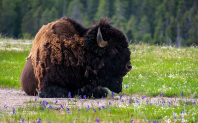 Planning a Trip to Yellowstone National Park   An Extensive Guide