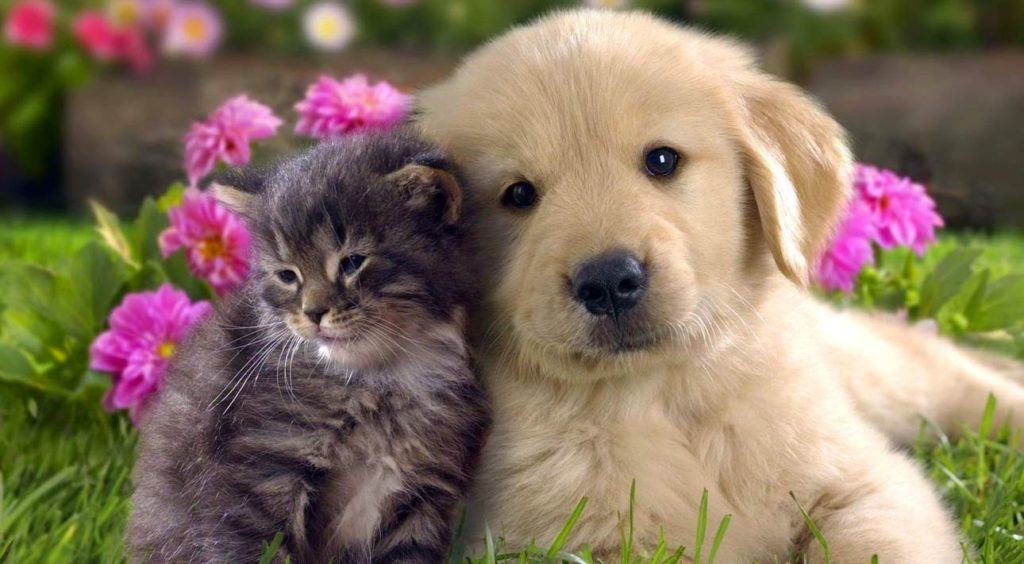 cat-and-dog-hd-wallpaper