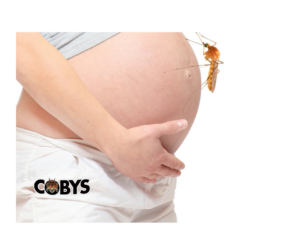 Pregnant Women Zika Virus
