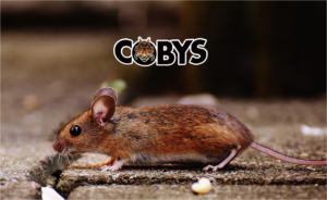 Mouse Coby's Pest Control