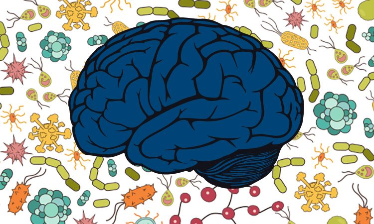 Why There Is More To Your Gut Than You Think